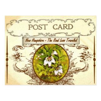 Postal de la flor de estado de New Hampshire del