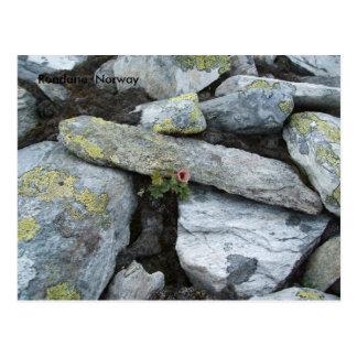 Postal de la flor de la montaña sola