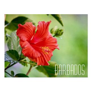 Postal de la flor del hibisco de Barbados