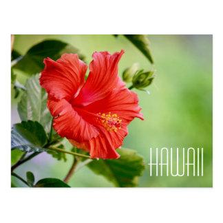 Postal de la flor del hibisco de Hawaii
