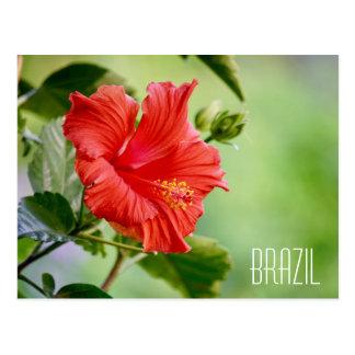 Postal de la flor del hibisco del Brasil