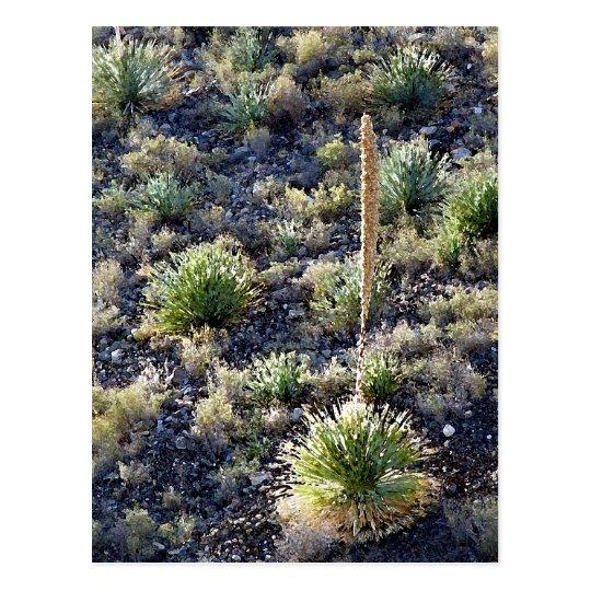 Postal de la flora #2 del desierto