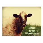 Postal de la foto de la vaca de Wisconsin