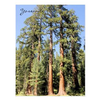 Postal de la foto del árbol de la secoya del