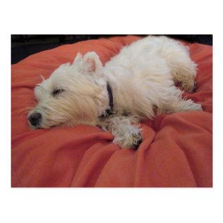 Postal de la foto el dormir Westie