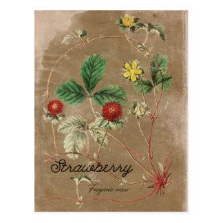 Postal de la fresa salvaje del estilo del vintage