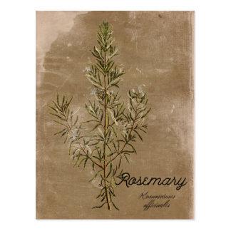 Postal de la hierba de Rosemary del estilo del