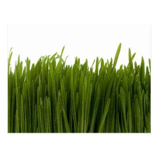 Postal de la hierba del trigo