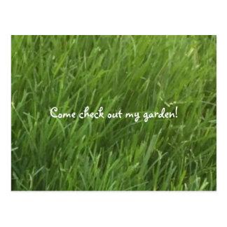 Postal de la hierba verde