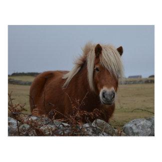 Postal de la impresión del arte del caballo