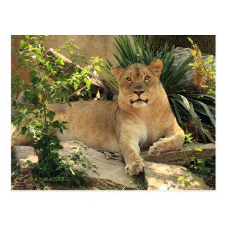 Postal de la leona