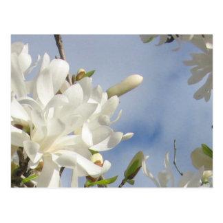 Postal de la magnolia de estrella