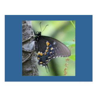 Postal de la mariposa del bosque