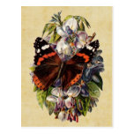 Postal de la mariposa del vintage