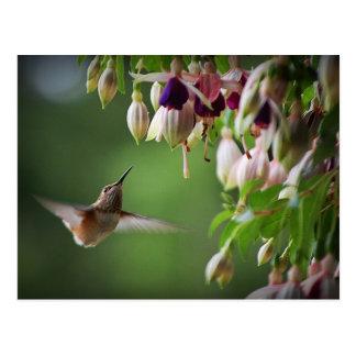 Postal de la planta del colibrí y de la flor de Fu