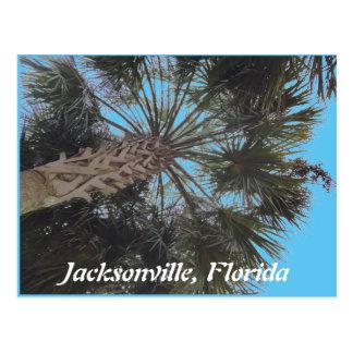 Postal de la playa de la Florida - palmera