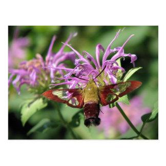 Postal de la polilla de colibrí