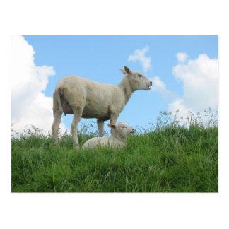 Postal de la primavera de las ovejas de la madre y