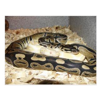 Postal de la serpiente
