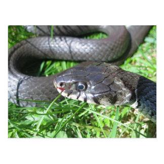 Postal de la serpiente de hierba