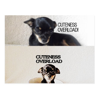 postal de la sobrecarga del cuteness