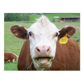 Postal de la vaca