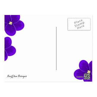 Postal de la violeta africana