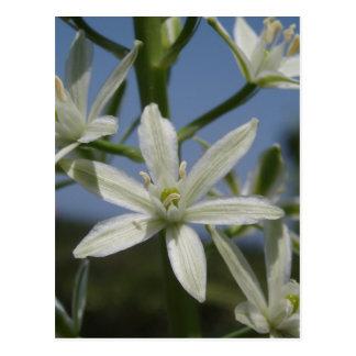 Postal de las flores blancas