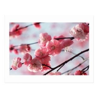 Postal de las flores de cerezo cualquier ocasión
