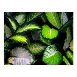 Postal de las hojas del blanco y del verde