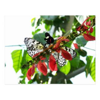 Postal de las mariposas