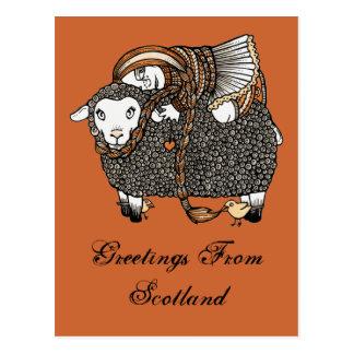 Postal de las ovejas de Shonaghs