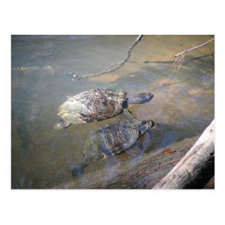 Postal de las tortugas del río