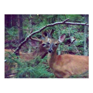 Postal de los ciervos