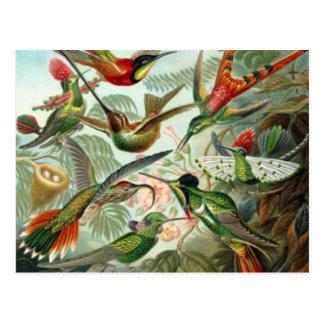 Postal de los colibríes del vintage