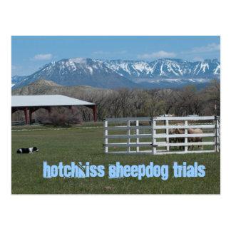 Postal de los ensayos de perro pastor de Hotchkiss