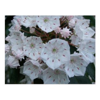 Postal de los flores del laurel de montaña