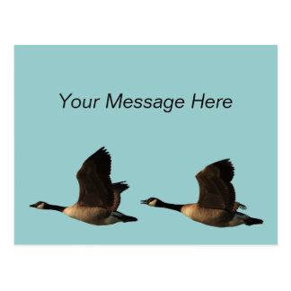 Postal de los gansos del vuelo
