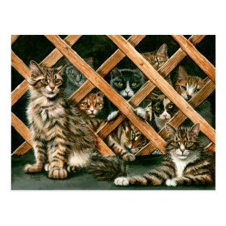 Postal de los gatos del enrejado