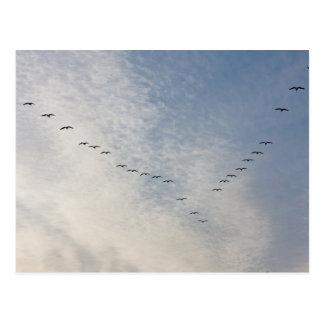 Postal de los pájaros de vuelo