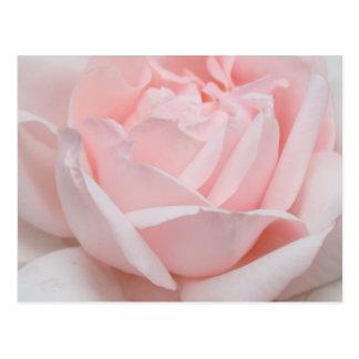 Postal de los pétalos color de rosa