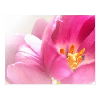 Postal de los tulipanes de la primavera