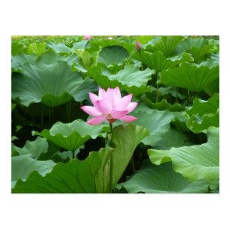 Postal de Lotus