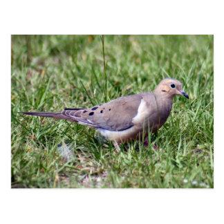 Postal de luto de la foto de la paloma