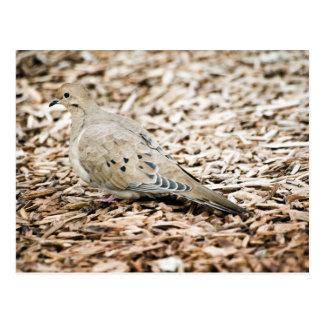 Postal de luto de la paloma 3