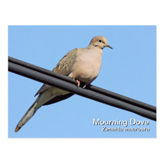 Postal de luto de la paloma
