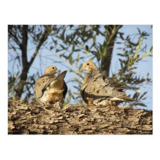 Postal de luto de los pares de la paloma