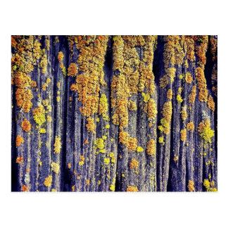 Postal de madera cubierta de musgo de la textura
