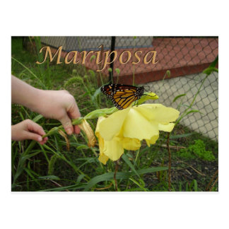 Postal de Mariposa