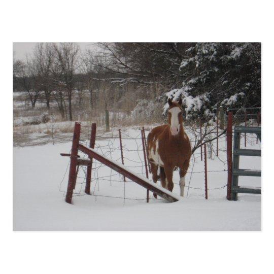Postal De pasos en la nieve